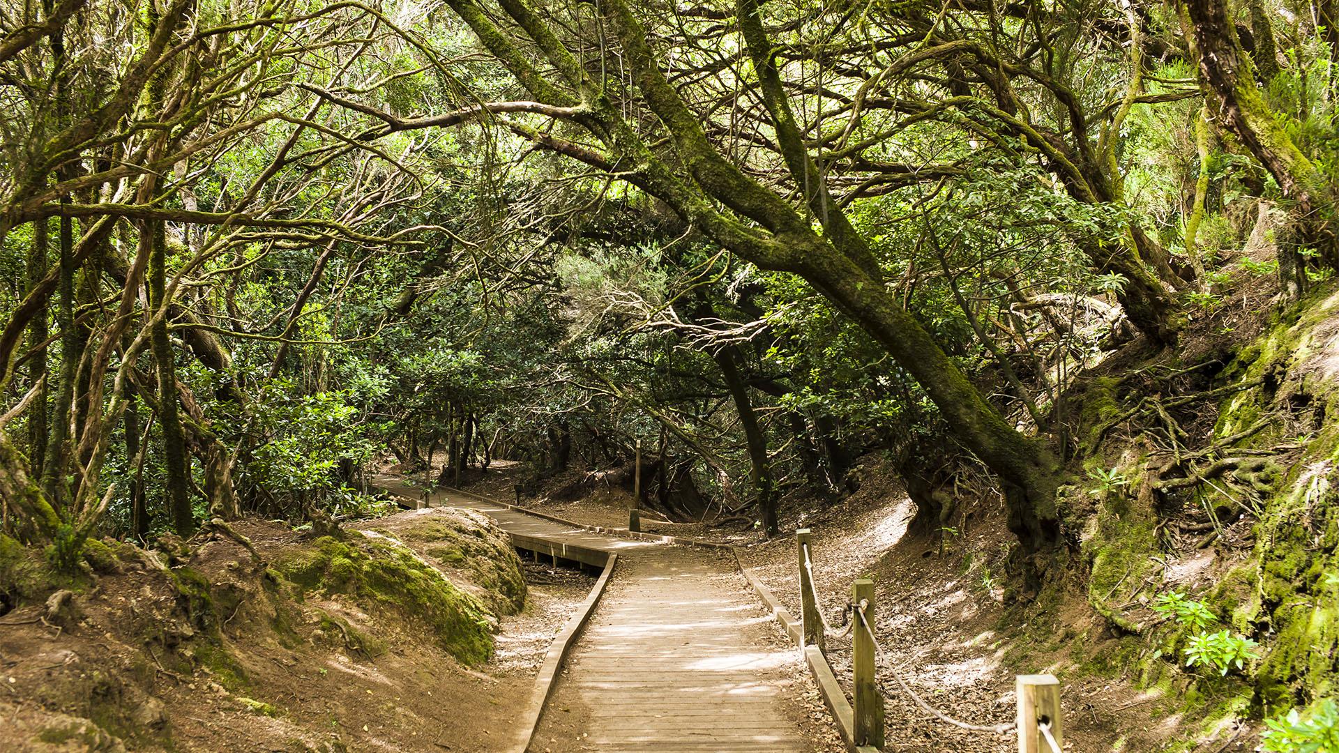 Teneriffa – der Mercedes Wald Bosque termófilo.