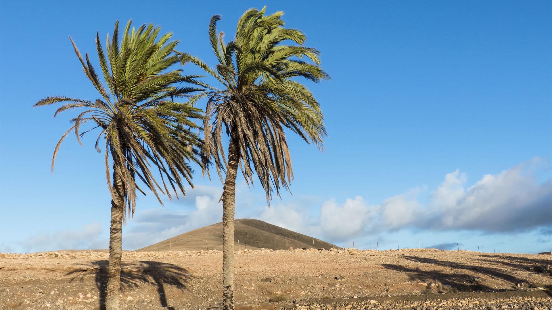 Klimazonen auf den Kanaren –die termophyle Übergangszone an den Berghängen.