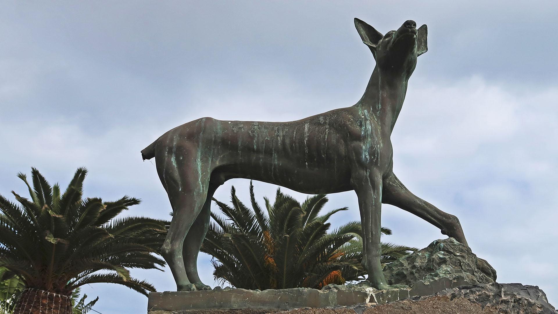 Der Podenco canario – der kanarische Jagdhund.