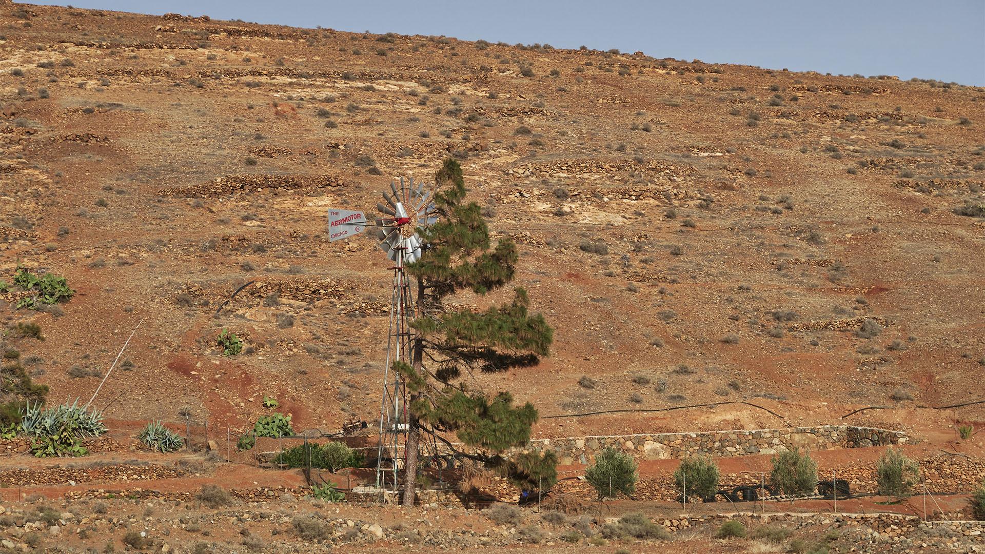 The Aeromotor Chicago pumpt seit den 1908er Jahren Grundwasser auf der Sonneninsel Fuerteventura.