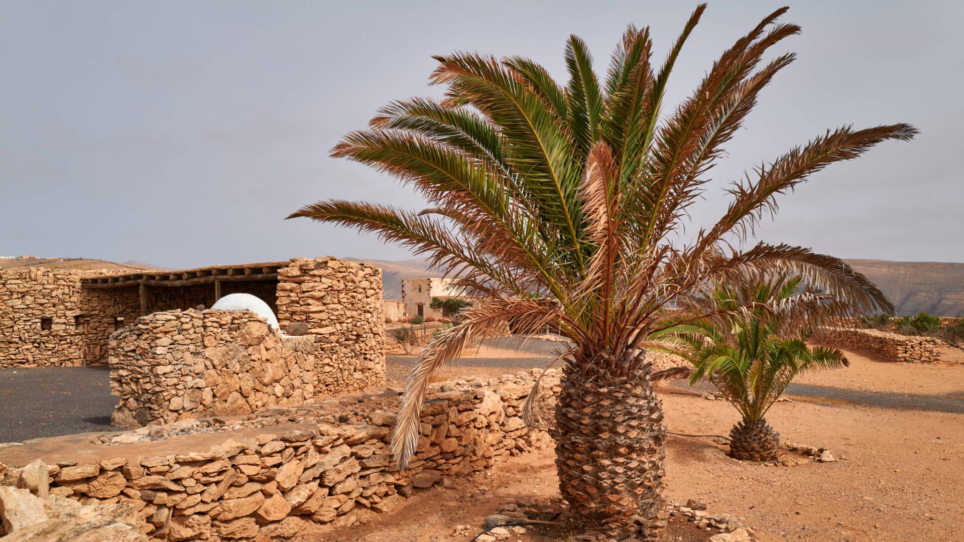 Casa de Felipito Puerto del Rosario Fuerteventura.