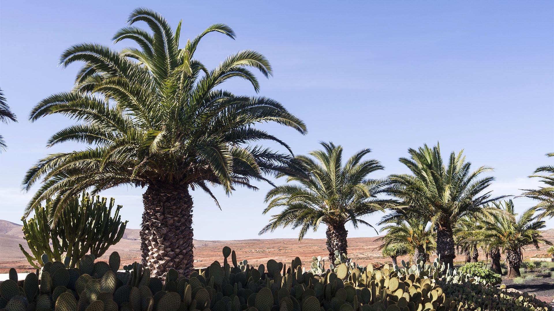 Sehenswürdigkeiten Fuerteventuras: Antigua – Museo del Queso Majorero