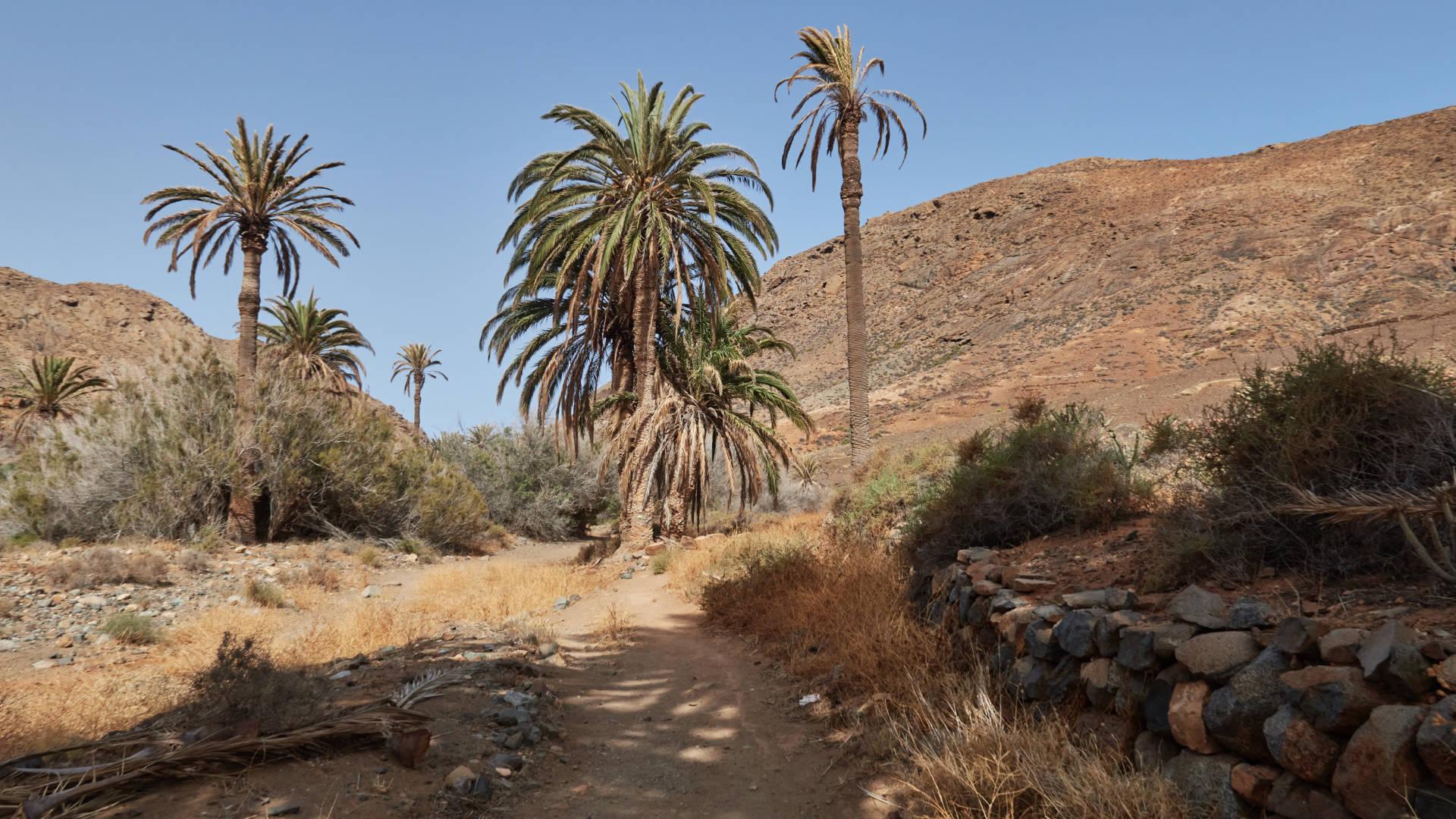 Barranco de las Peñitas Fuerteventura gegen Mittag.