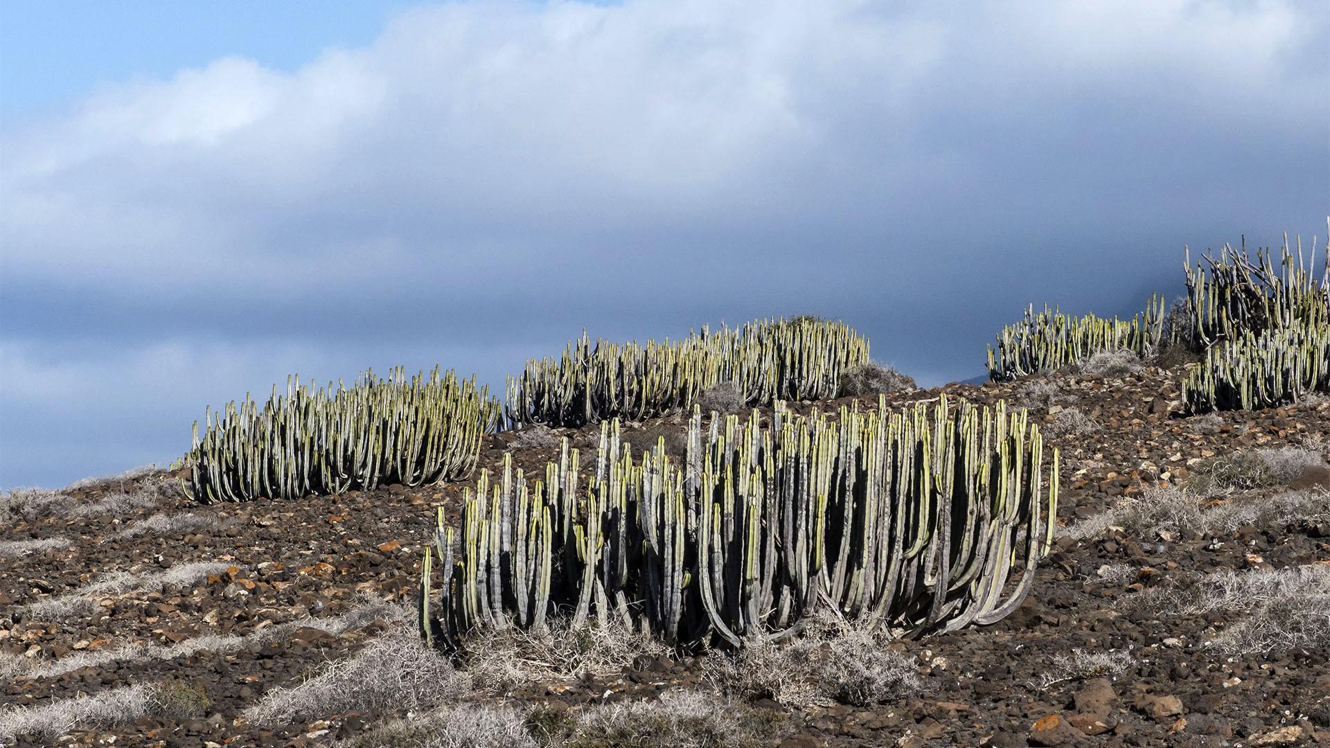 Sehenswürdigkeiten Fuerteventuras: Jandía – Roque del Moro