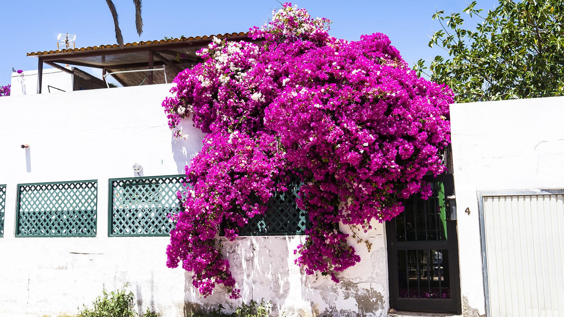 Der Ort Corralejo Fuertventura: Corralejo viejo