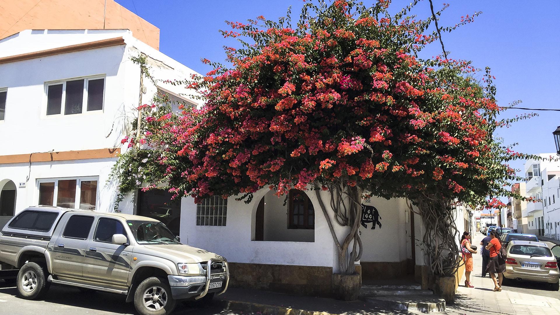 Der Ort Corralejo Fuertventura
