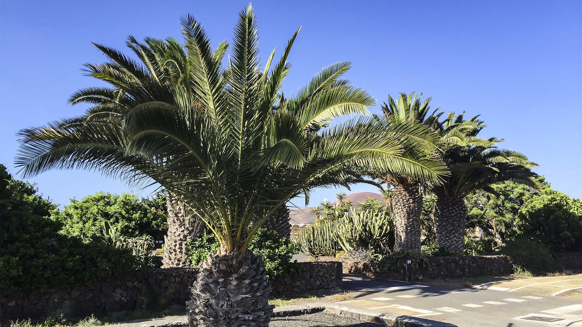 Städte und Ortschaften Fuerteventuras: Lajares