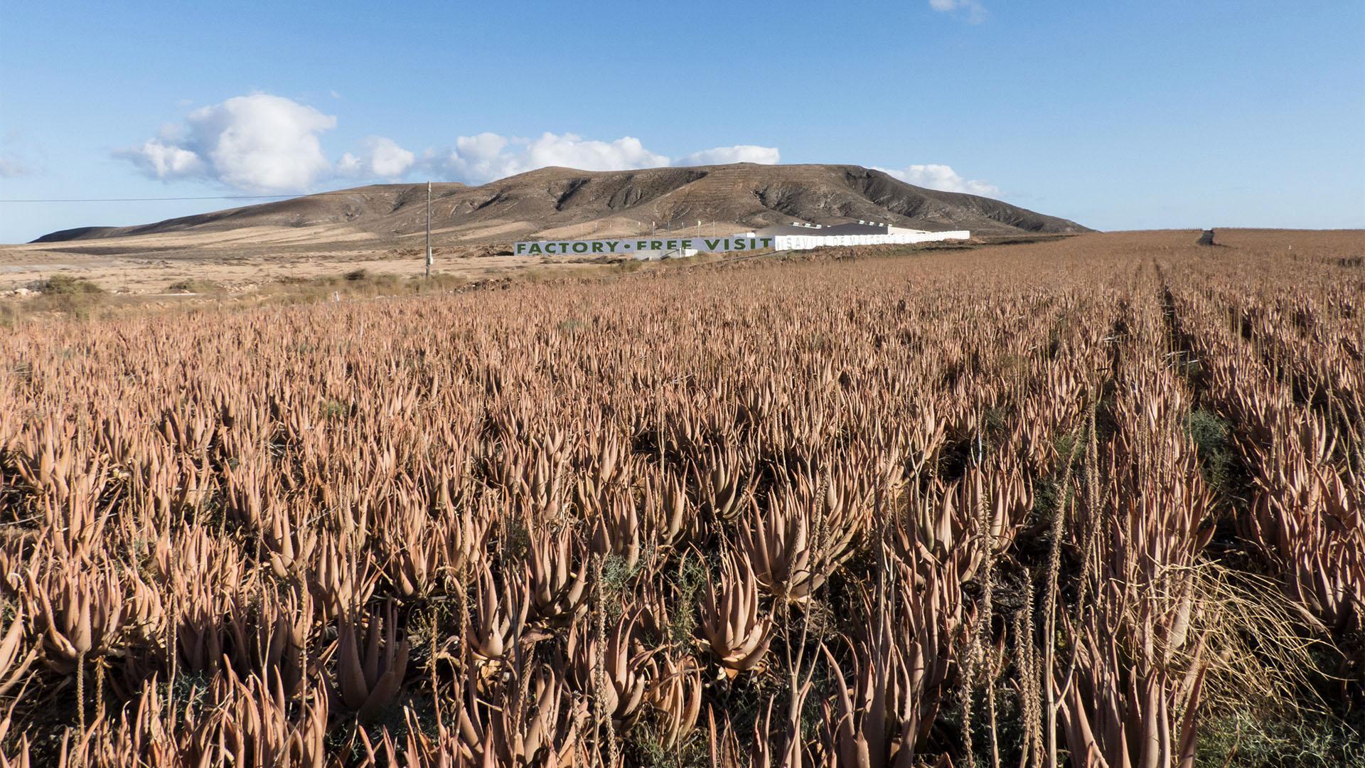 Städte und Ortschaften Fuerteventuras: Tiscamanita