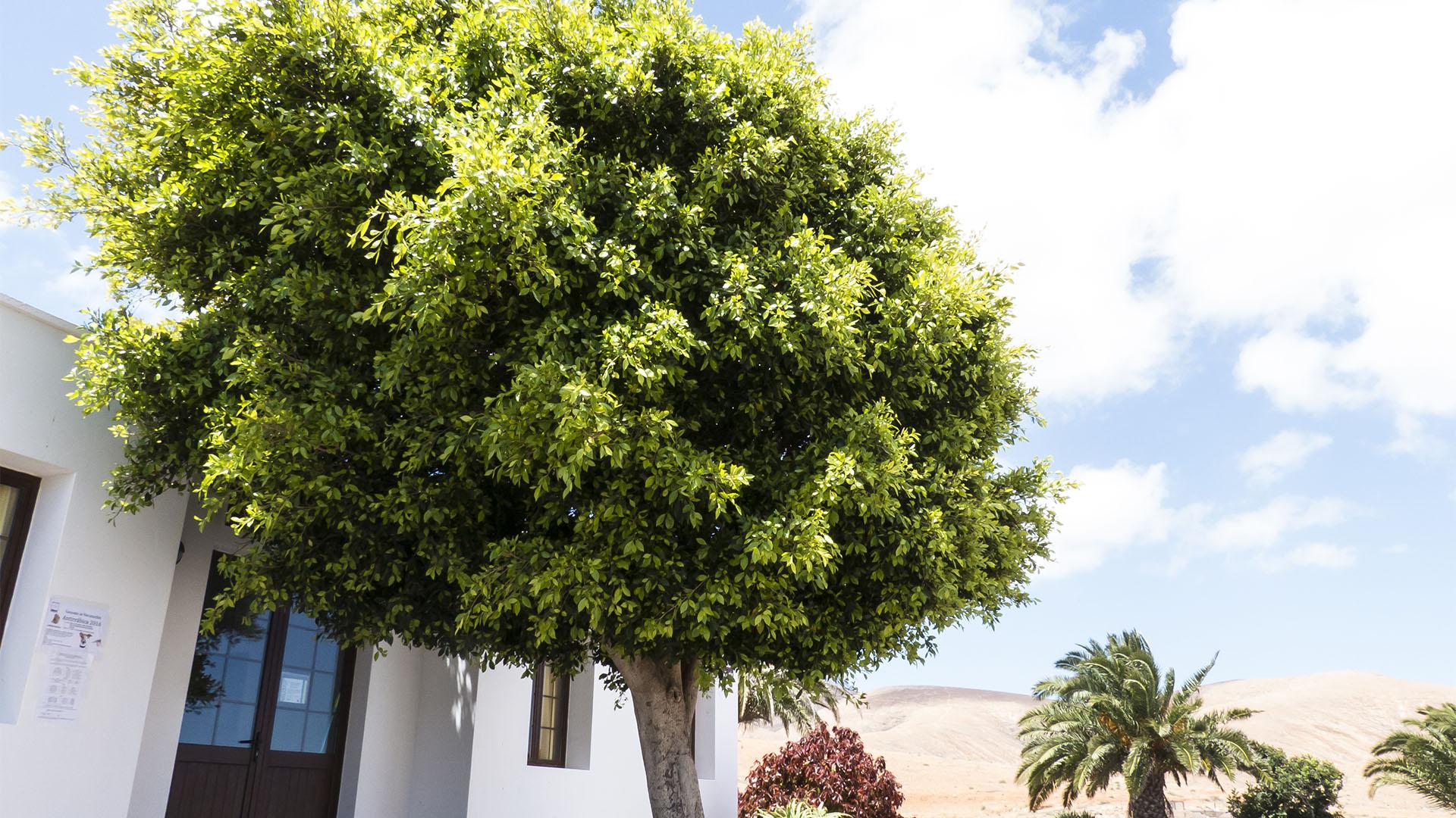 Der Ort Valle de Santa Inés Fuerteventura.