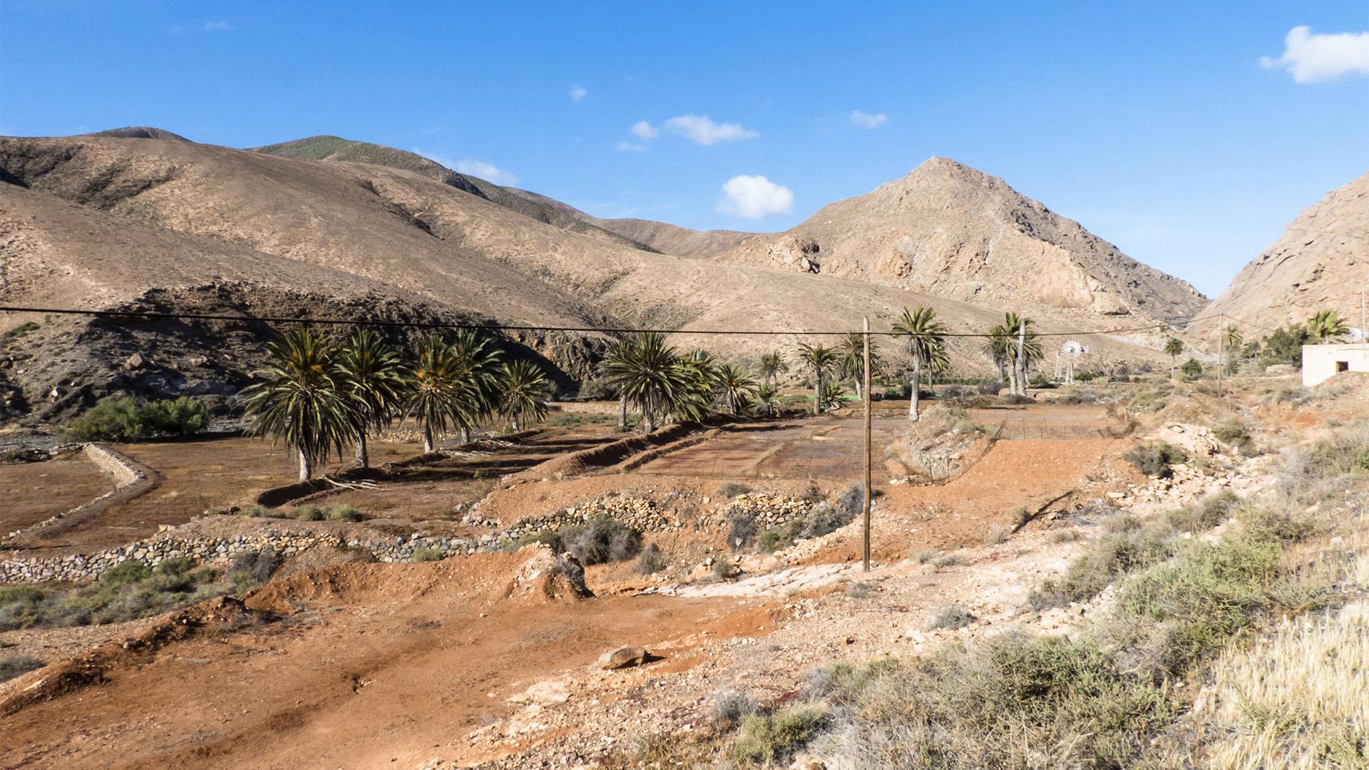 Landwirtschaft um den Ort Pájara auf Fuerteventura.