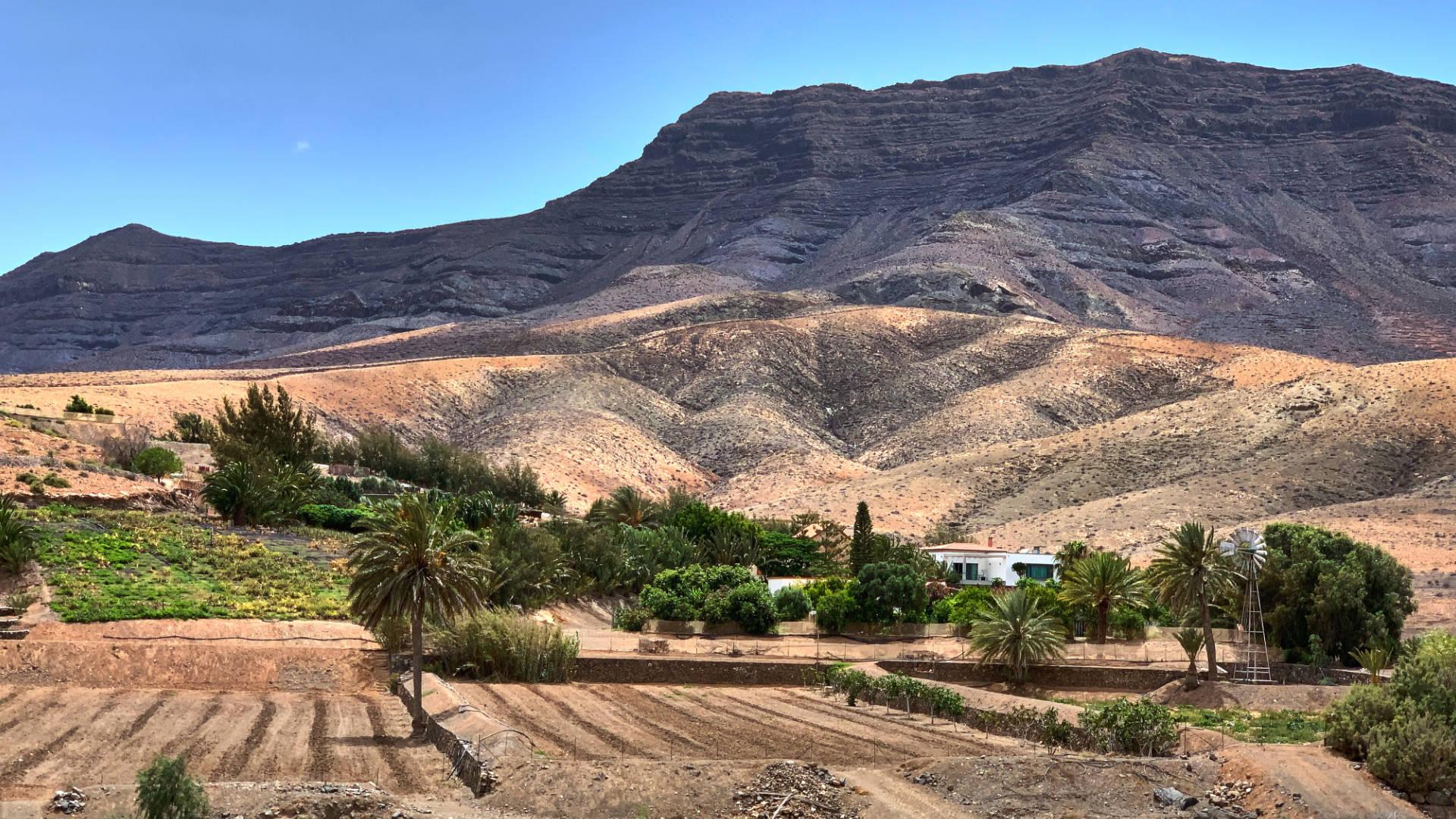 Die Renaissance der Landwirtschaft auf Fuerteventura in El Cardón.
