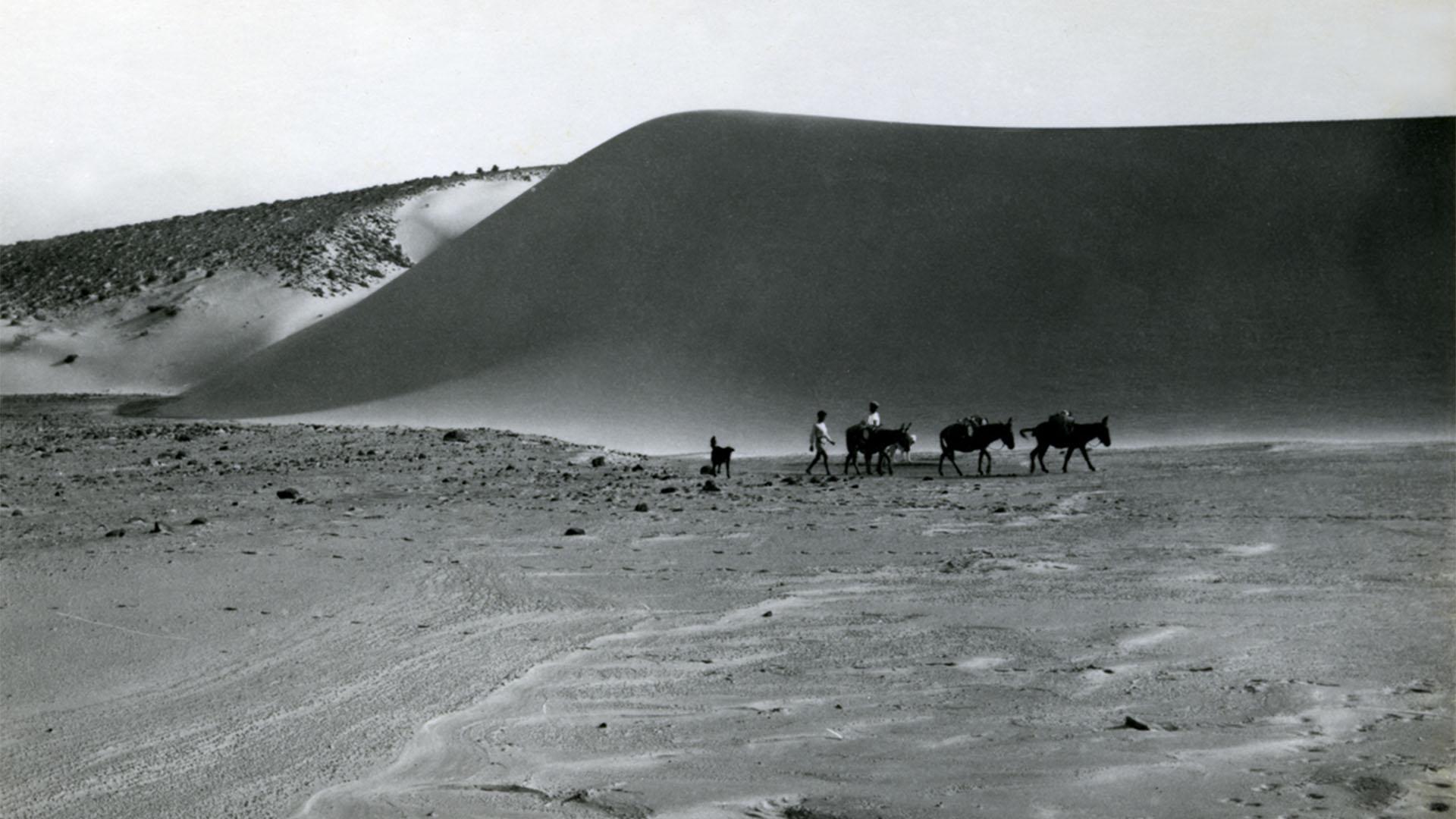 Maultier- und Kamelkarawanen auf Fuerteventura noch in den 1940igern und 1950igern für Warentransporte. Strassen gab es kaum auf Fuerteventura.