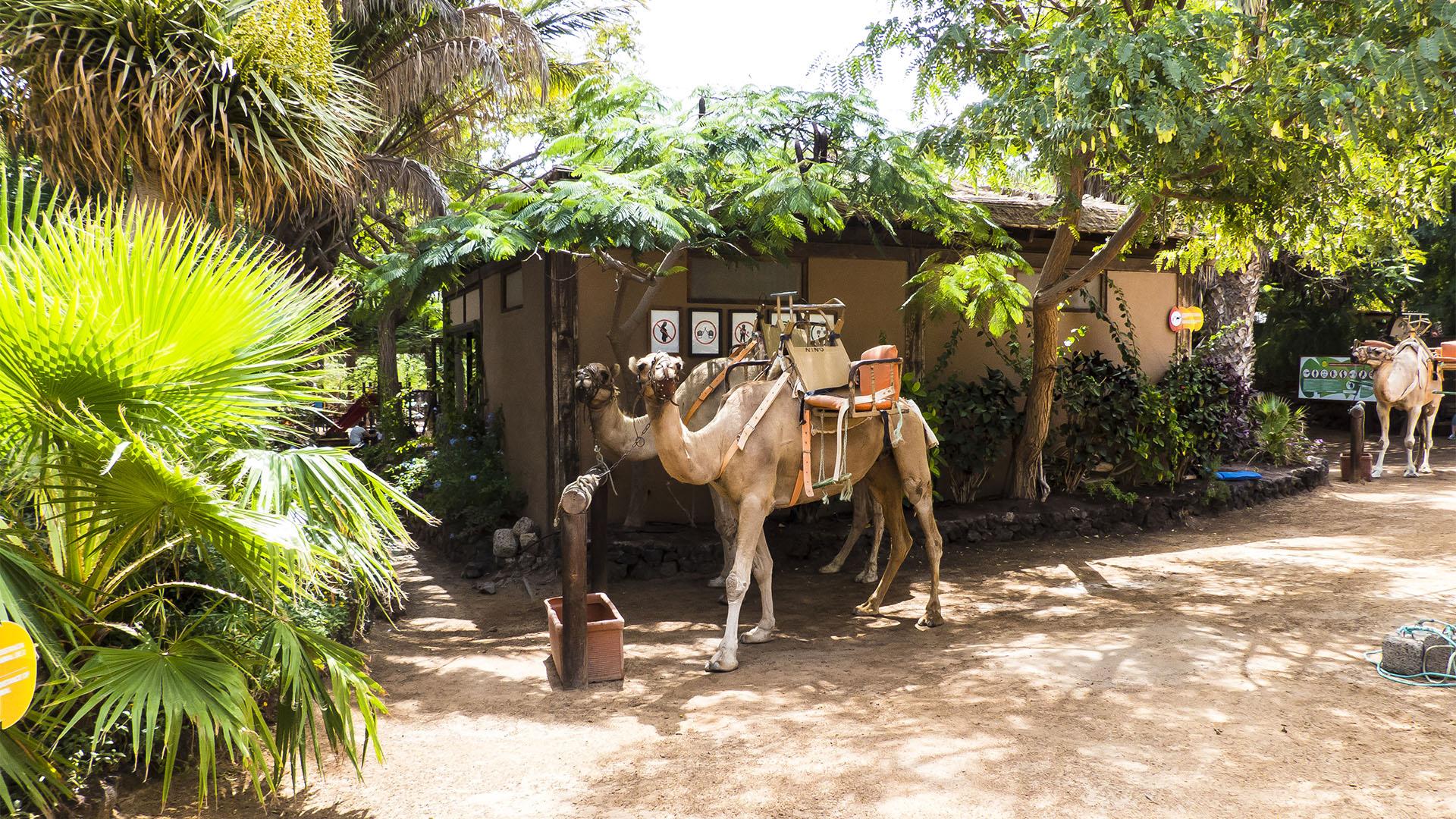 Freizeitparks Fuerteventura: Der Oasis Park in La Lajita – Tier- und Pflanzenwelt.
