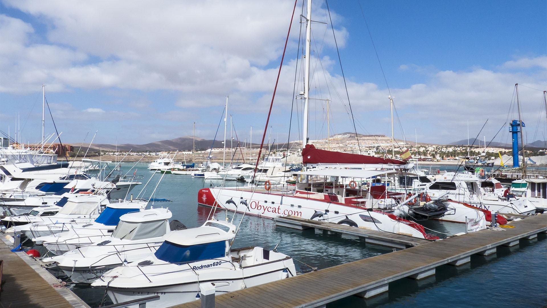 Bootsexkursionen auf Fuerteventura.