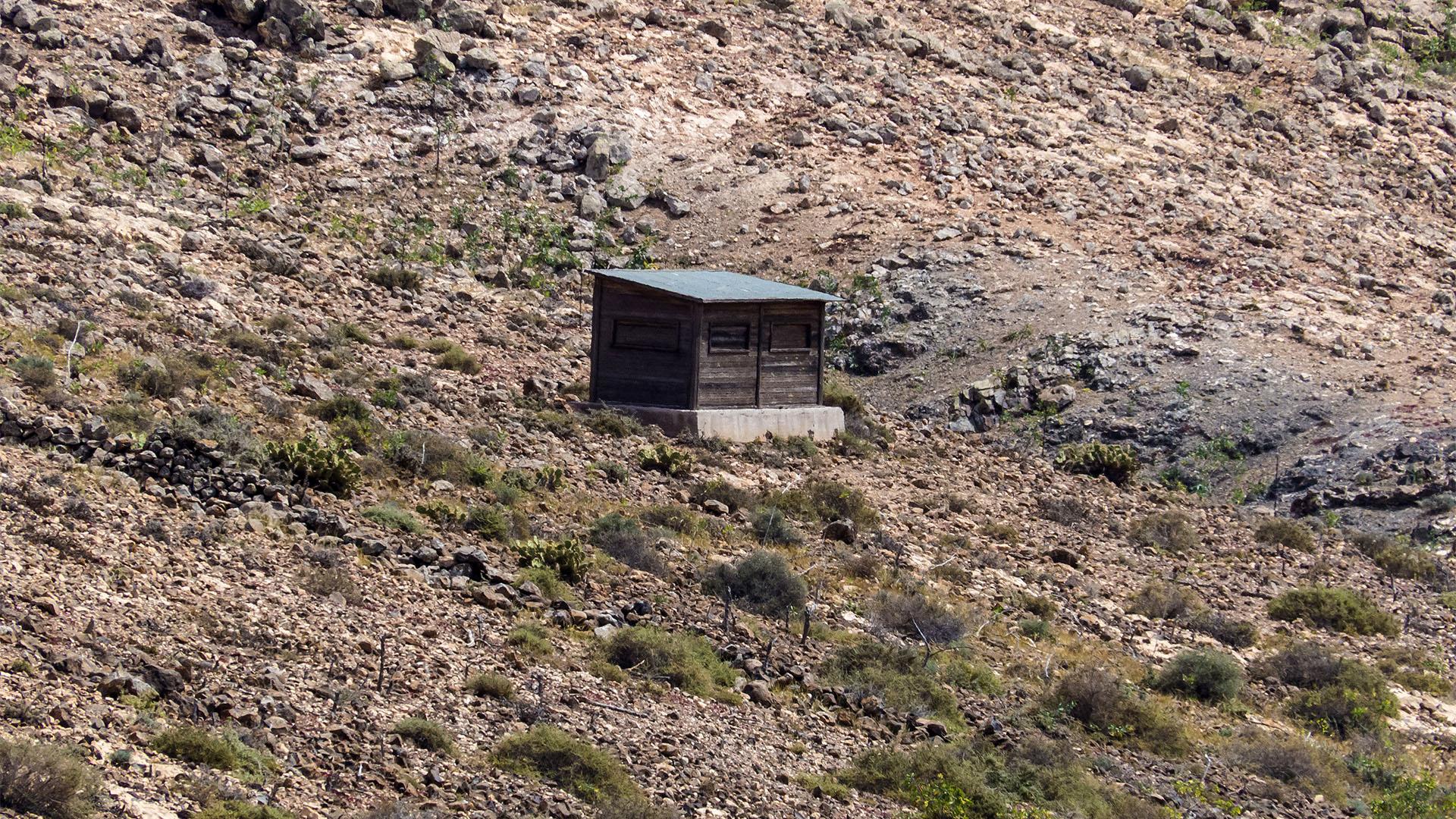 Aktivitäten Fuerteventura –ein Paradies für Birdwatcher - Birdwatching.