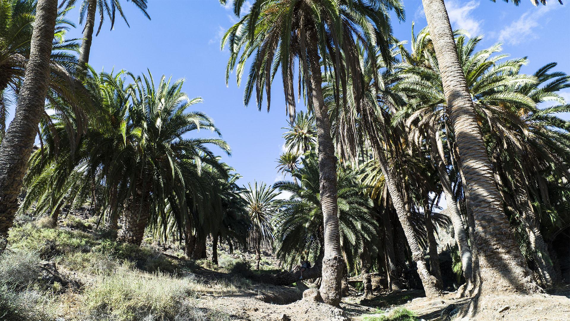 Fuerteventura Inselrundfahrt Zentralmassiv – Vega de Río Palmas Madre del Agua.