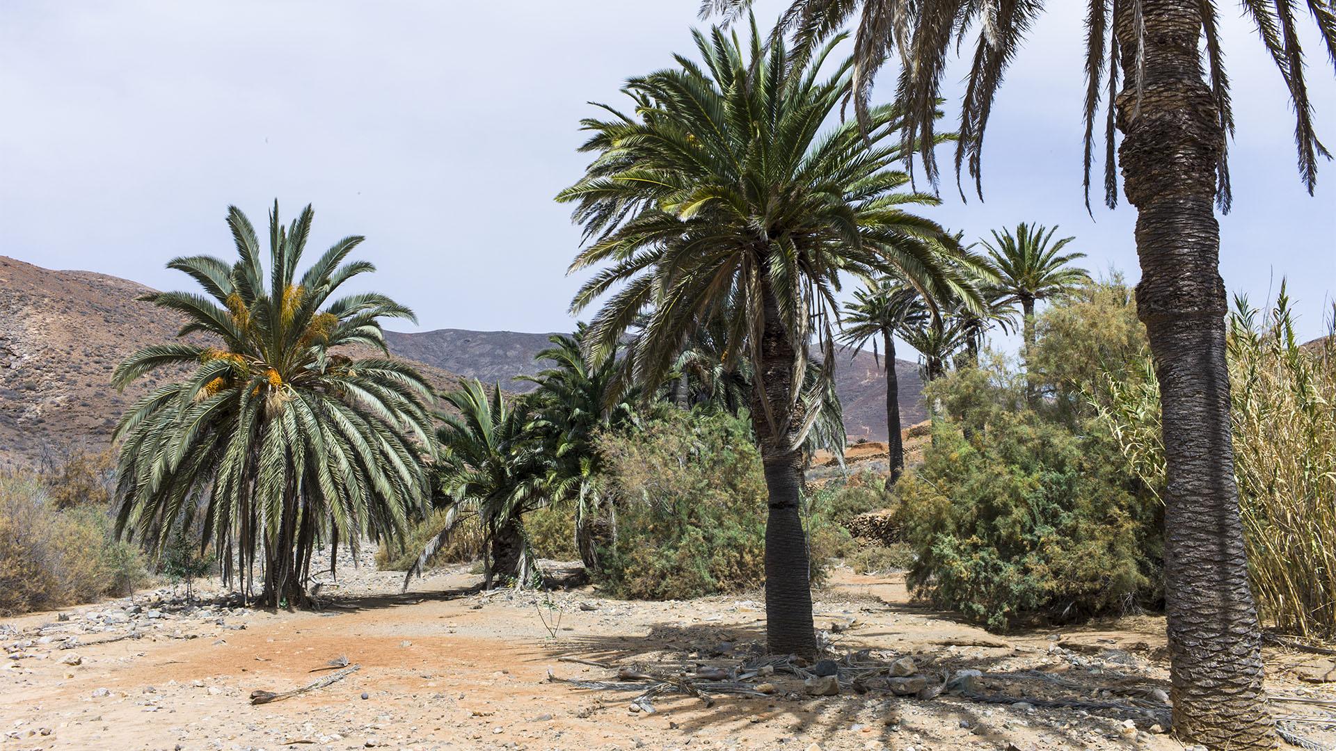 Fuerteventura Inselrundfahrt Zentralmassiv – Vega de Río Palmas Palmental.