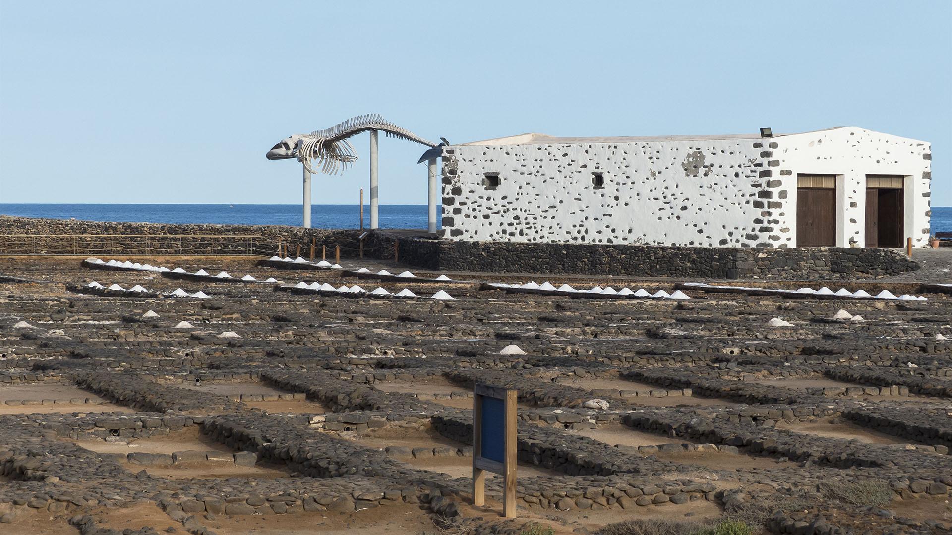 Fuerteventura Inselrundfahrt Zentralmassiv – Salinas del CarmenMuseo de la Sal.