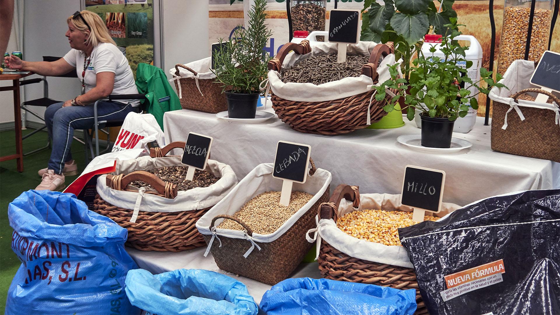 FEAGA –La Feria Agrícola, Ganadera y Pesquera de Fuerteventura Pozo Negro.