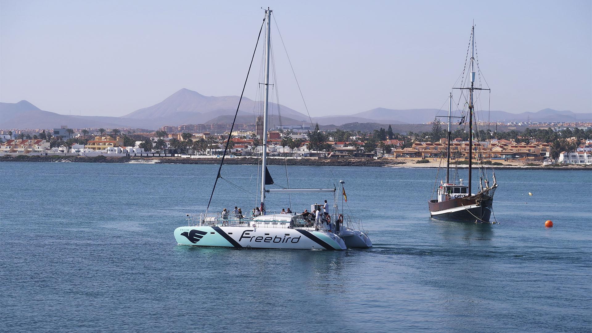 Bootsexkursionen Fuerteventura.