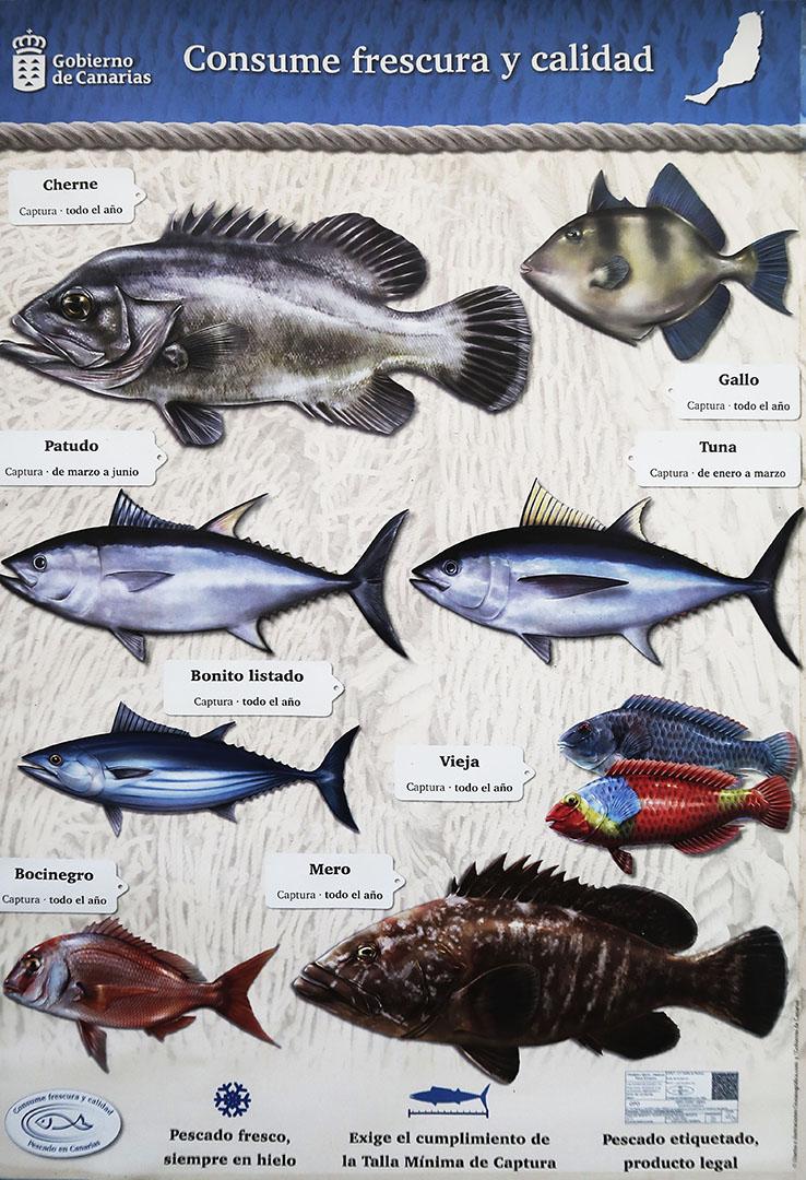 Fischen auf Fuerteventura –was darf wann und wie gefangen werden.