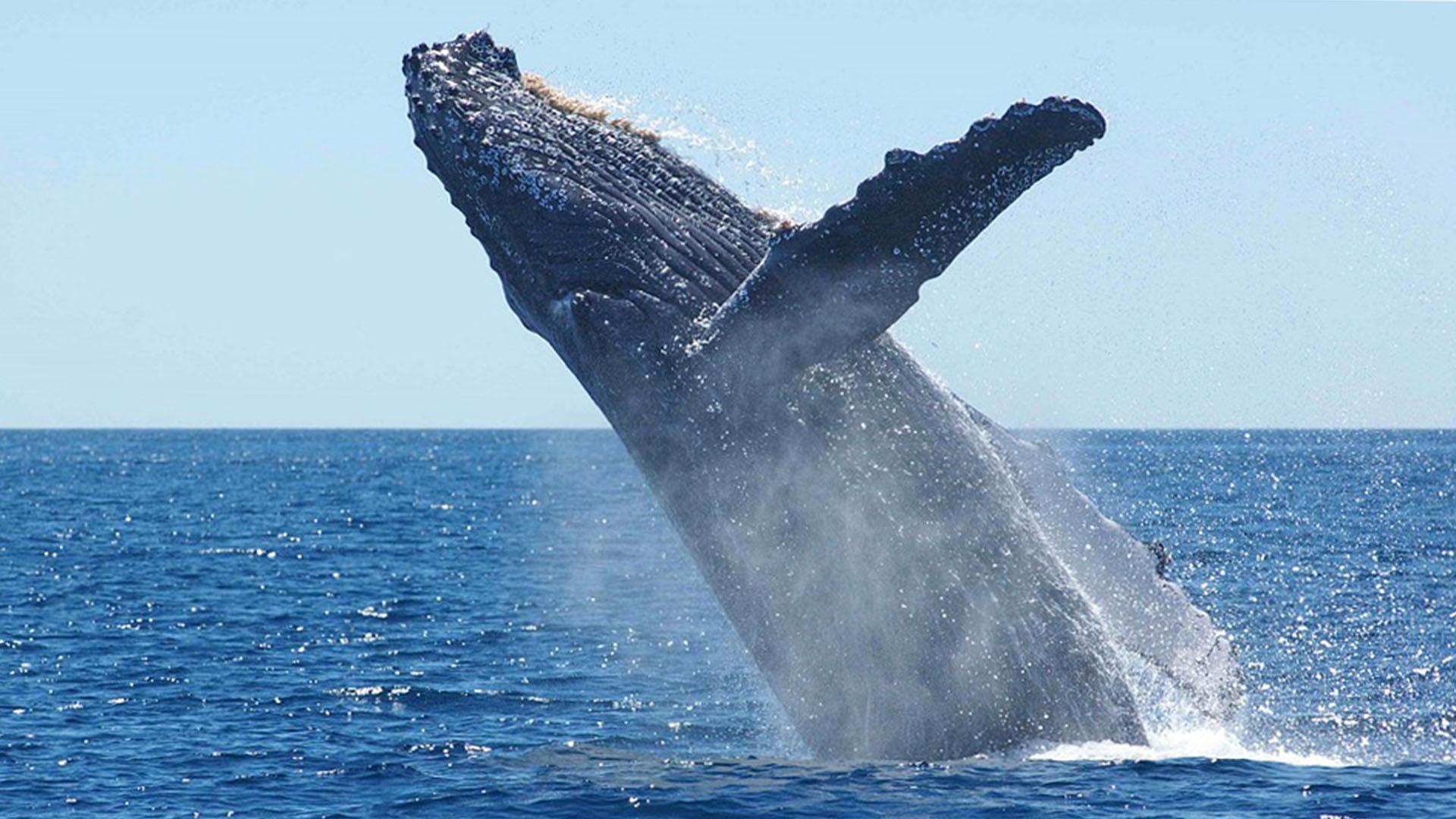 """Whale Watching Meerenge """"La Bocaina"""" Corralejo."""