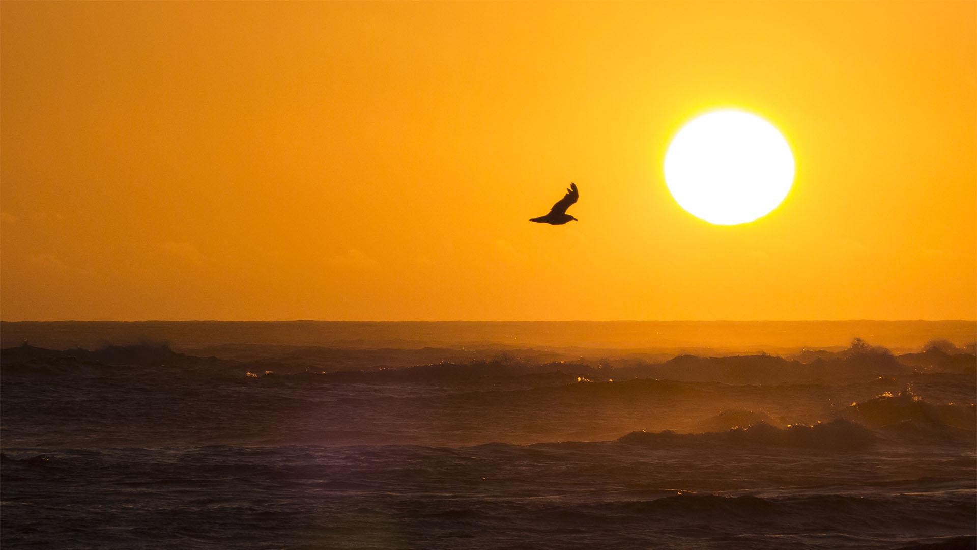 Sommerstimmung an der Westküste von Fuerteventura.